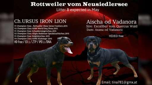 Rottweiler Wurfankündigung - Rottweiler (147)